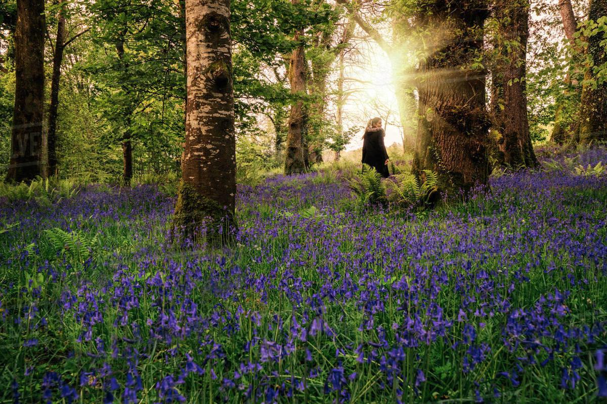 Kết quả hình ảnh cho Spring in Ireland